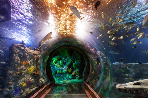 The aquarium in Dallas, Texas